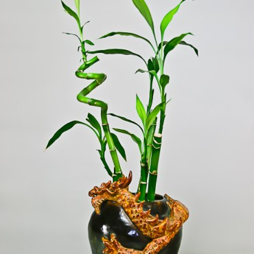 Golden Dragon Bamboo Pot