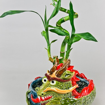 Drangon Pot with Lucky Bamboo